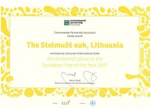 Stelmuze oak 13th place in ETY 2017 300
